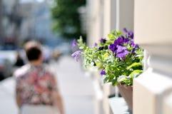 在房子墙壁上的紫罗兰色花在街道 库存图片