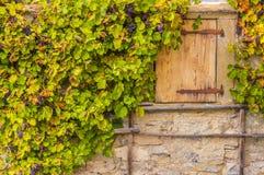 在房子墙壁石头的葡萄树 库存照片