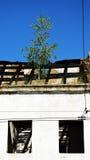 在房子废墟的树 库存图片