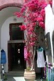 在房子旁边的开花的九重葛 库存照片