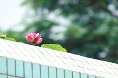 在房子的上面的一朵桃红色莲花 免版税库存照片