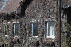 在房子的墙壁上的干植物 免版税库存照片