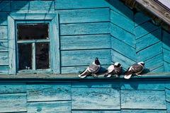 在房子的屋顶的鸽子 免版税库存图片