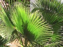 在房子的棕榈 免版税库存照片