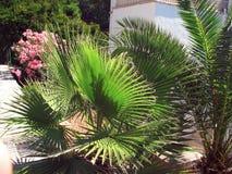 在房子的棕榈 图库摄影