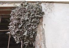 在房子的白蚁蜂房 免版税库存照片