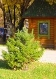 在房子的背景的小绿色云杉由木头制成 免版税库存图片