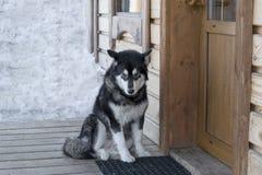 在房子的门廊的多壳的狗 库存图片
