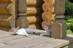 在房子门廊的逗人喜爱的杂种小猫 免版税库存照片