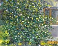 在房子附近构造在茉莉花帆布绿色开花的灌木的油画  库存例证