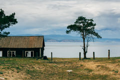 在房子附近的孤独的杉木 库存照片