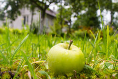 在房子附近的湿苹果 库存图片