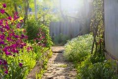 在房子附近的花园在阳光下 免版税库存照片