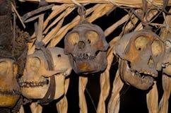 在房子Mentawai部落的礼节动物头骨 库存照片