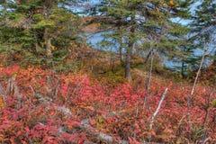 在所有季节期间, Splitrock灯塔是一个普遍的国家公园 库存照片