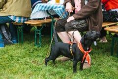 在所有者旁边的一条狗在一个传统节日在德国 在人和动物之间的友谊 免版税库存照片