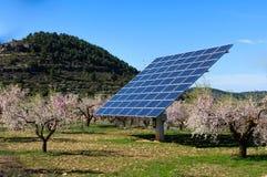 在扁桃的领域的太阳电池板在开花的 免版税图库摄影