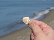 在手上拿着一个贝壳有蓝色海背景 免版税图库摄影