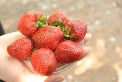 在手上的一个红色草莓 免版税库存图片