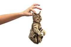 在手上的小猫 免版税库存照片
