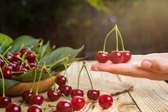 在手上的樱桃 在篮子的樱桃在木桌上 樱桃 免版税图库摄影