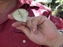 在手上的热带蝴蝶 免版税库存照片