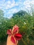在手上的秋天叶子 库存照片