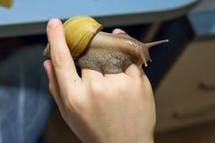 在手上的蜗牛 免版税库存照片