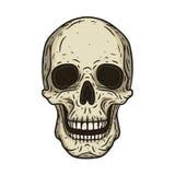 在手中导航人的头骨被画的样式的例证 库存图片