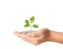 在手中生长从硬币的植物 免版税库存图片
