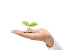 在手中生长从硬币的植物 库存照片
