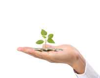 在手中生长从硬币的植物 免版税库存照片