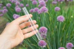 在手中试管水,植物在背景中 免版税库存图片