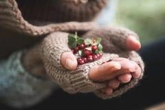在手套的手拿着越橘莓果 库存照片