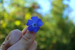 在手指之间的紫色花在一个晴天! 库存图片