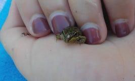 在手指之间的青蛙 免版税库存照片