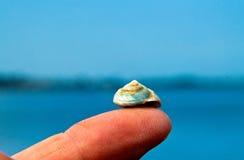 在手指技巧的蜗牛 免版税库存图片