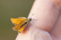 在手指的小的橙色蝴蝶 免版税库存图片