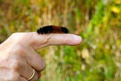 在手指的毛虫 库存图片