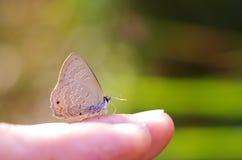 在手指的线蓝色蝴蝶 免版税库存照片
