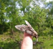 在手指的蝴蝶 免版税图库摄影