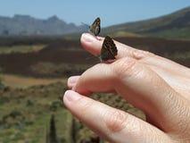 在手指的蝴蝶 库存图片