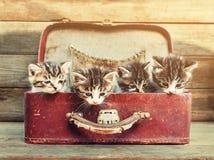 在手提箱的四只小猫 库存图片