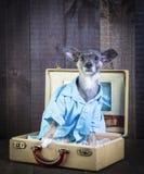 在手提箱的爱犬 免版税库存照片