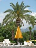 在手段区域的棕榈 免版税库存图片