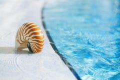 在手段游泳池边缘的舡鱼壳 库存图片