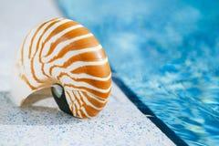 在手段游泳池边缘的舡鱼壳 免版税库存照片