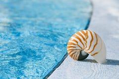 在手段游泳池边缘的舡鱼壳 图库摄影