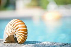 在手段游泳池边缘的舡鱼壳 库存照片
