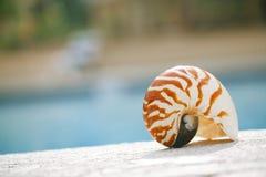 在手段游泳池边缘的舡鱼壳 免版税库存图片